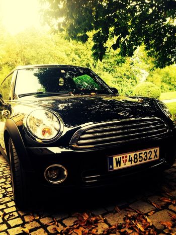 Mini Car Black Beauty