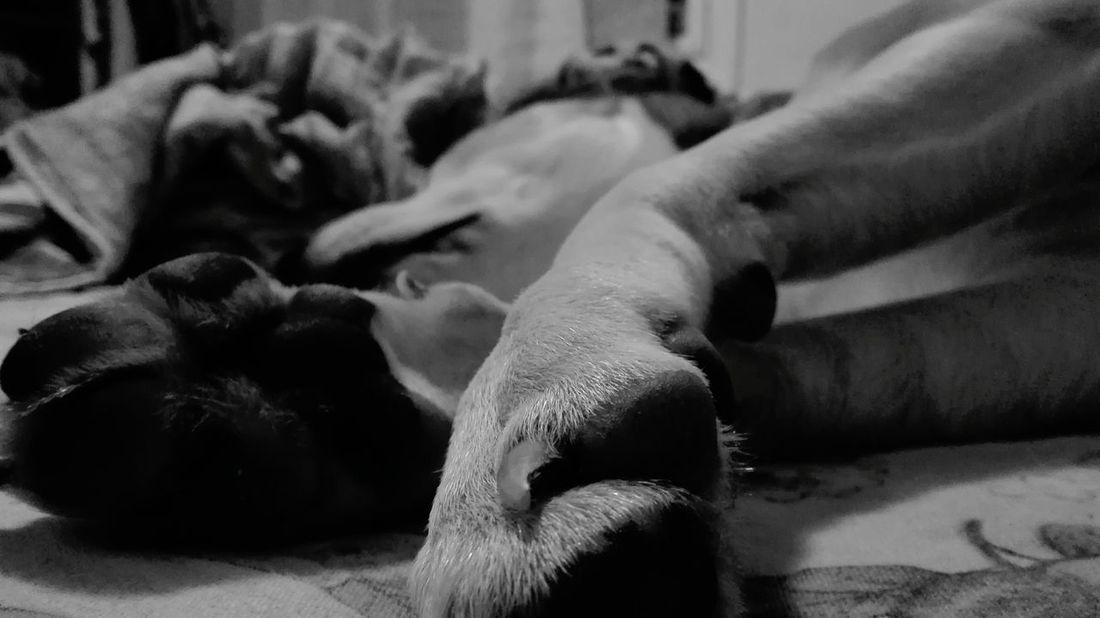 Sleepy Dog Cute Dog  Best Friend I❤dogs