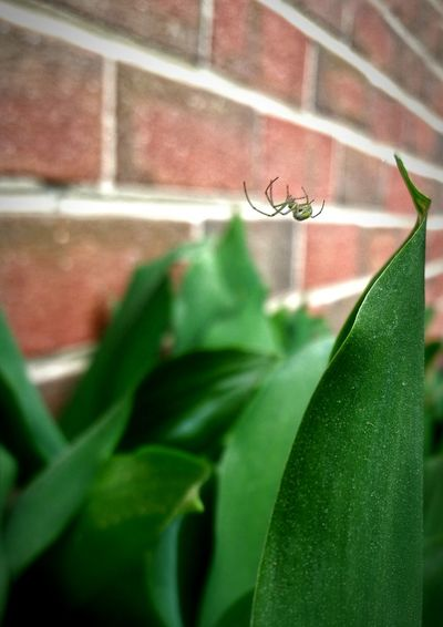 Taking Photos Tadaa Community Nature Beautiful Spider Pollen Spring Mobile Photography Focus Brick Wall