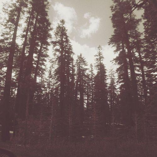 Noir Trees Random Shot Landscape_photography Check This Out Drastic Edit Random Landscape