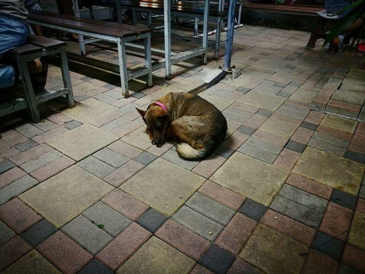 ง่วงนอนนน Animal Themes One Animal Mammal Pets Outdoors No People Day Nature Taking Photos Dog Dog Sleeping  Dog Life Dogphoto HuaweiP9 HuaweiP9Photography