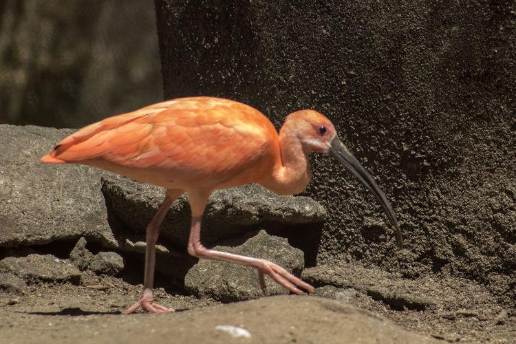 Animal Animal Themes Animals In The Wild Beak Bird Full Length Nature One Animal Outdoors Standing Standing On One Leg Water Wildlife Zoology