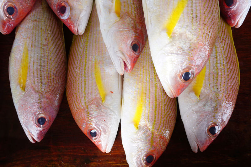 Snapper Fish #delicious Animal Fin Animal Themes Catch Of Fish Close-up Day Fish Fish Market Fishing Fishing Industry Food Food And Drink For Sale Freshness Healthy Eating Indoors  Market Market Stall No People Raw Food Retail  Seafood Trapped EyeEm Selects EyeEmNewHere