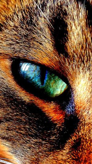 My cat's eye! Cat Cute Pet Animals Pets. Eye Cute Animals