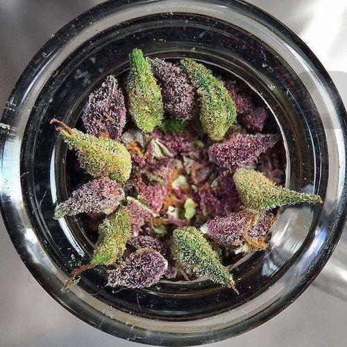 Bowl of all the great strainz!! Purplekush🍁 Bowlofweed Marijuana 💚 Smoke Weed January2016 Medical Marijuana