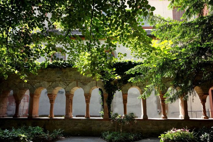Tree Growth Built Structure Architecture Green Color No People Day Architectural Column Low Angle View Outdoors Nature Sky Lusamgärtchen Würzburg Old Architecture Säulen Bogen Citypark Cityscape
