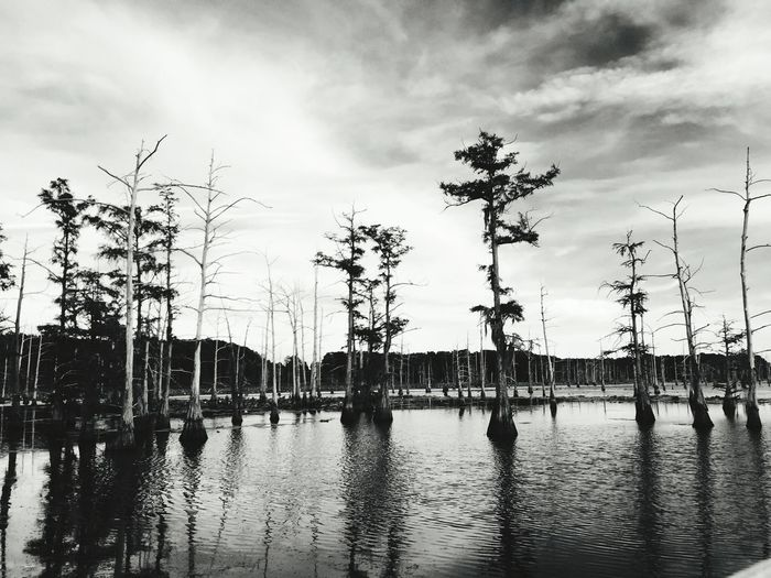 Trees growing at lake against cloudy sky