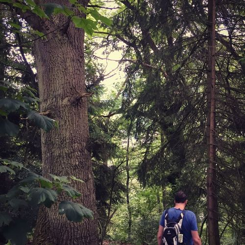 Rear view of woman amidst trees in forest