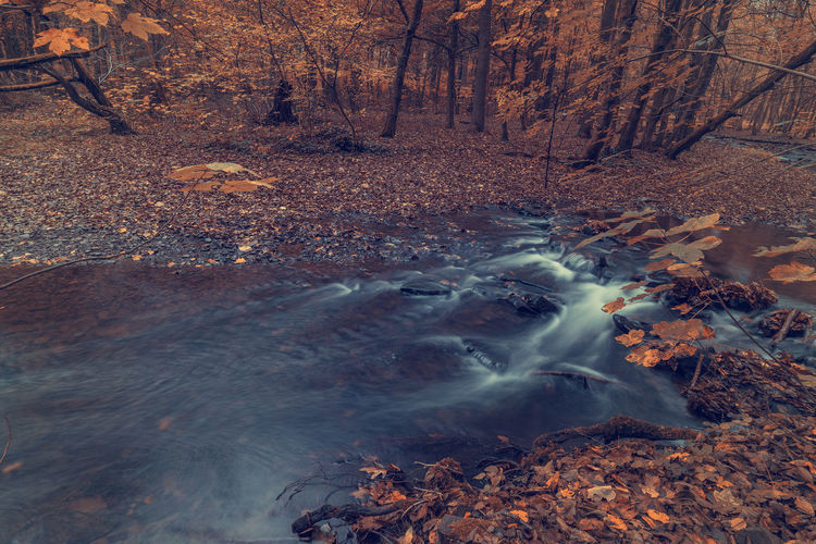 River in the forest in autumn. Art Backgrounds Tree Forest Water Land Nature No People Tranquility Beauty In Nature Long Exposure Plant Autumn Day Plant Part Motion Scenics - Nature Rock Solid Leaf Rock - Object Outdoors Change WoodLand Flowing Stream - Flowing Water Flowing Water