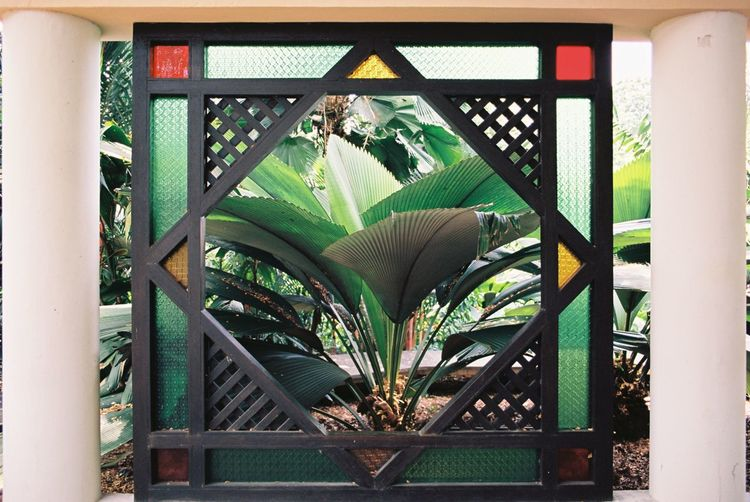 Filmisnotdead Analogue Photography Film Photography 35mm Film Architecture Plant Green Color Day Pattern No People Built Structure Nature Wood - Material Growth Leaf Tree