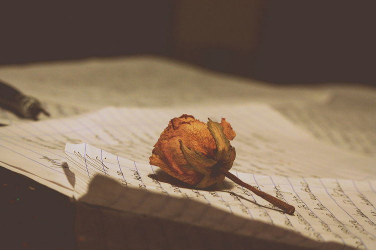 Canonphotography Close-up Day Flower Head Indoors  Letters In The City Loveletters Nature No People Photography Photooftheday Poetry Rosebud Rosé Table Telling Stories Differently The Still Life Photographer - 2018 EyeEm Awards