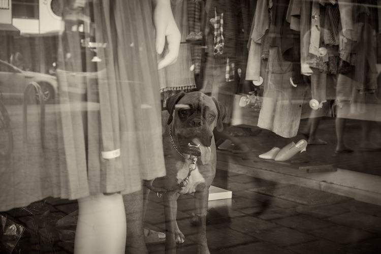 Dog In Shop Seen Through Glass Window