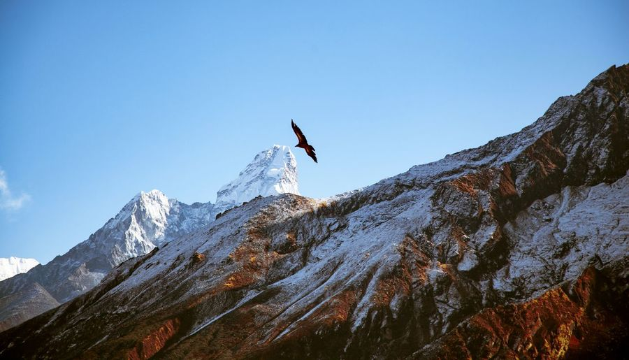 Low angle view of birds on snowcapped mountain against sky