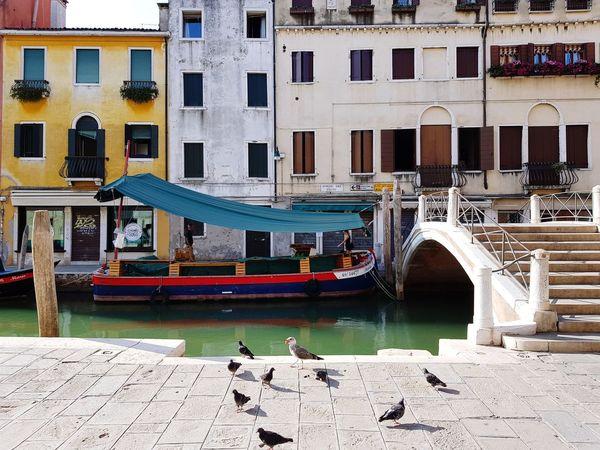 Architecture Water Bridge - Man Made Structure Built Structure Canal Building Exterior Nautical Vessel Travel Destinations Outdoors Gondola - Traditional Boat Day Birds Bird Venice Venezia Veneza