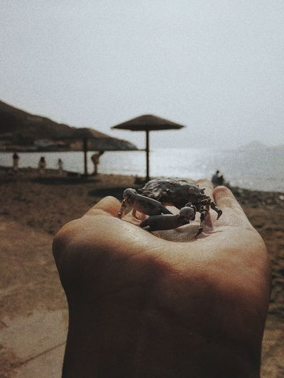 Cropped hand of person with crab at beach against sky