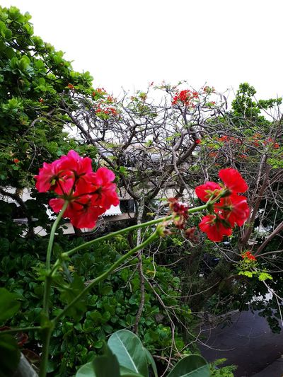 Flower Growth Plant Nature Fragility Freshness Beauty In Nature No People Green Color Red Day Pink Color Outdoors Leaf Close-up Flower Head Sky