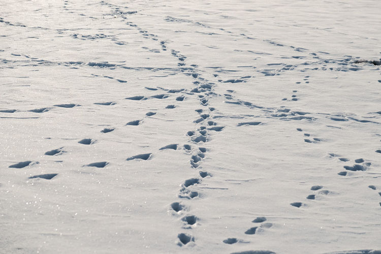 Close-Up Of Animal Tracks In Snow