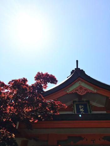 Shrine Of Japan Shrine Shrines Taking Photos Enjoying Life Skyporn Sky_collection Fukuoka,Japan 紅葉八幡宮 福岡市早良区