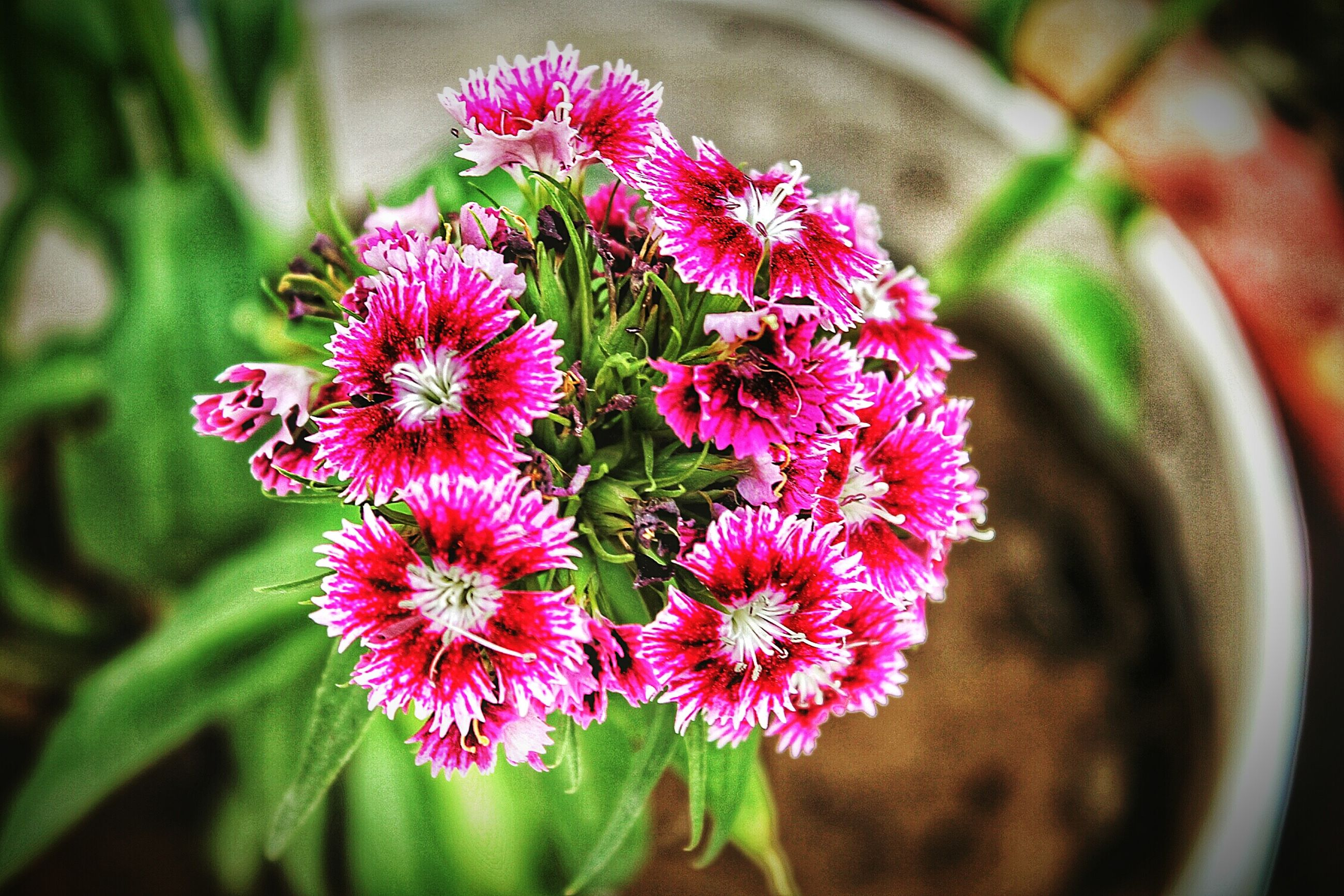 flower, freshness, petal, fragility, growth, focus on foreground, flower head, beauty in nature, pink color, close-up, plant, nature, blooming, in bloom, selective focus, botany, day, outdoors, red, bud