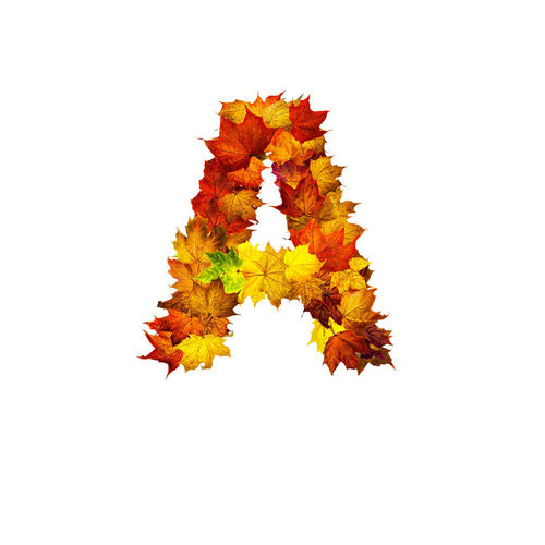 Autumn leaves against white background