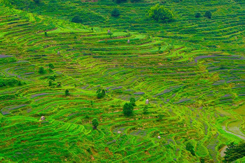 Terrace Countryside Country Life Farm Chinese Village Natire Green