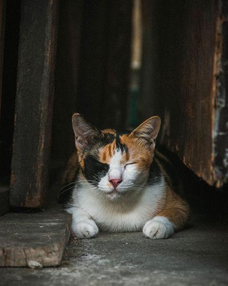 cat Feline Cat