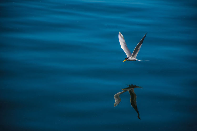 Finding New Frontiers Flying Water Bird Lake Spread Wings Outdoors Beauty In Nature Sea Life Beauty In Nature One Animal Animal Themes Animals In The Wild Animal Wildlife No People Nature Day Pelican