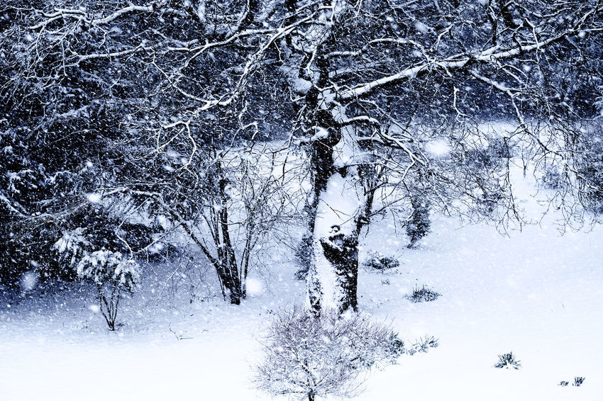 Bare Tree Beauty In Nature Branch Cold Temperature Day Forest Freshness Frozen Landscape Nature No People Outdoors Scenics Sky Snow Snowdrift Snowflake Snowing Tranquil Scene Tranquility Tree Weather White Color Winter