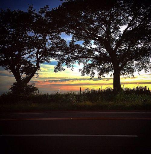 Nature Highway Tree Sky Offline