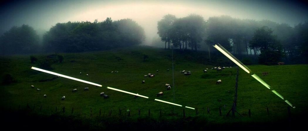 Empire Of Lights AMPt_community EyeEm Nature Lover