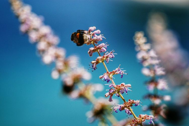 Close-Up Of Bee On Flowers Against Sky