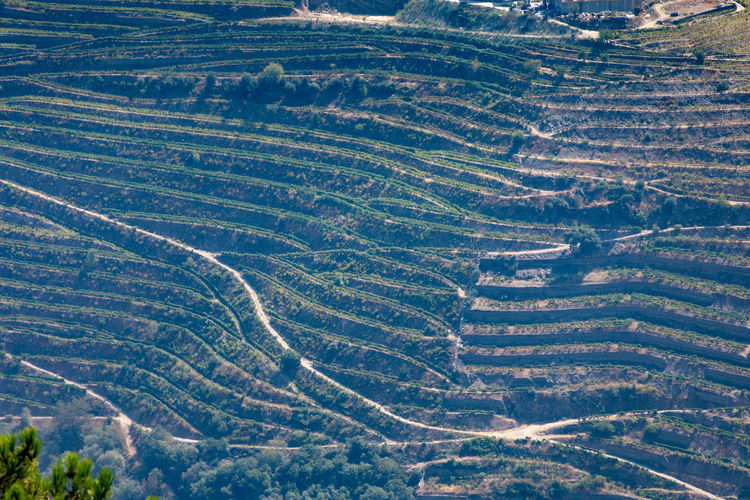 Douro valley vineyard , Portugal Douro  Pattern, Texture, Shape And Form Portugal Aerial View Agriculture Beauty In Nature Day Environment Farm Field Full Frame Growth High Angle View Land Landscape Nature No People Outdoors Pattern Plant Rural Scene Scenics - Nature Tranquil Scene Tranquility