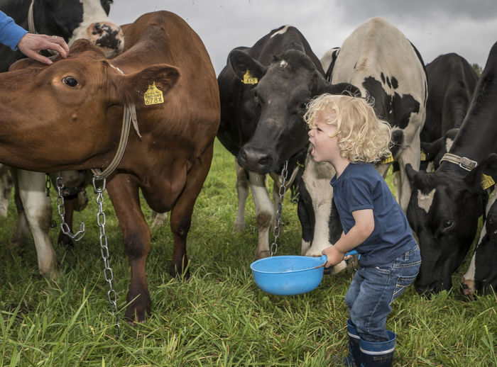Agriculture Casual Clothing Child Childhood Children Day Domestic Animals Domestic Cattle Farm Field Full Length Grass Grassy Green Color Herbivorous Livestock Mammal Outdoors Person Selective Focus