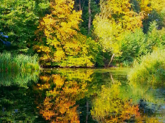 Reflection Lake Tree Nature Water Outdoors Day Beauty In Nature No People Forest October Wood Fall Forest Tree Area WoodLand Beauty In Nature