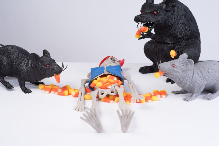 Crafts Eating Evil Fun Funny Halloween Sitting Skeleton Backgrounds Black And White Blackandwhite Candy Corn Candycorn Craft Grey Hunt Ideas Lying Down Red Color Scene Studio Shoot Studio Shot White