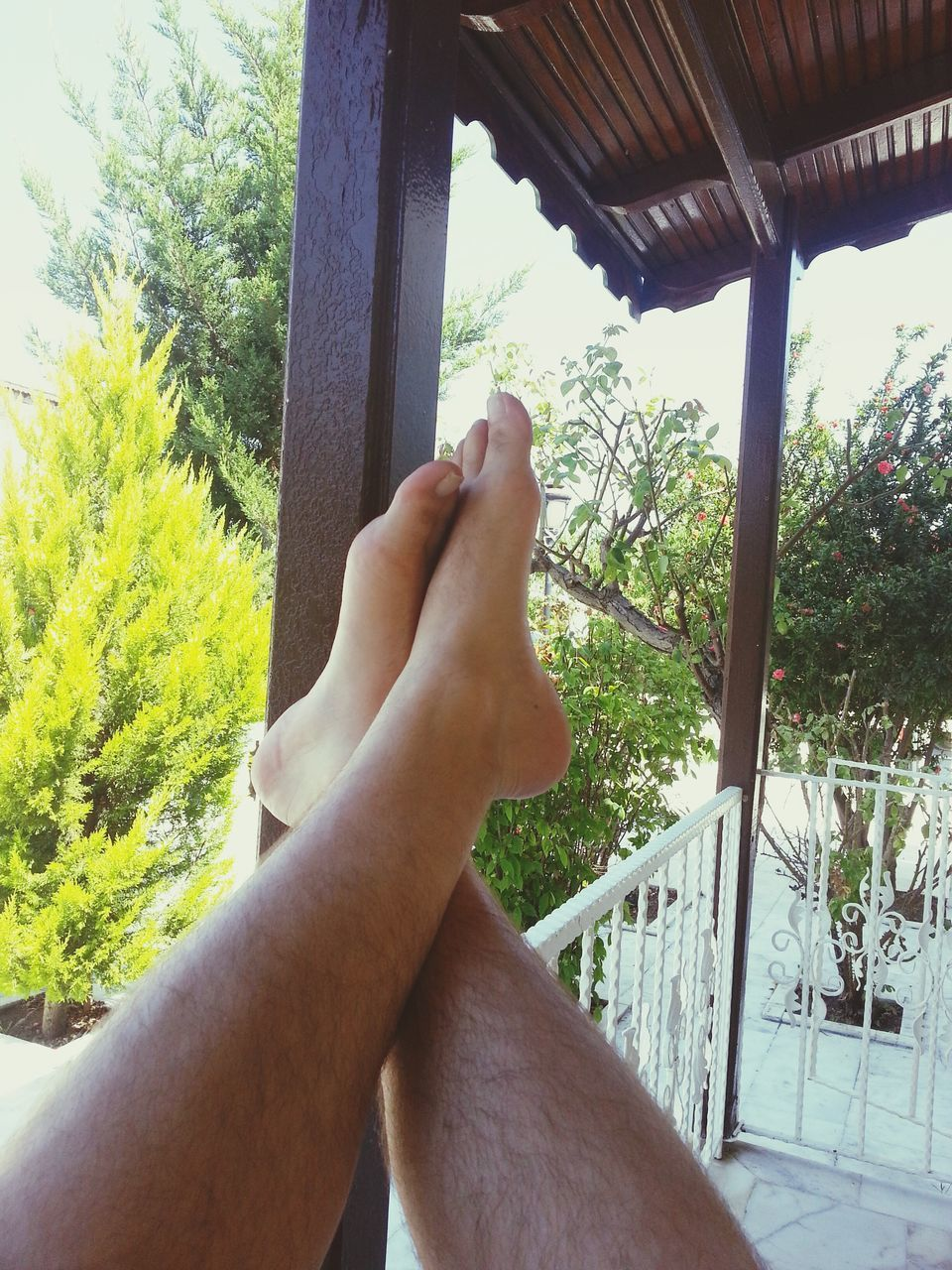 tree, person, part of, personal perspective, lifestyles, cropped, barefoot, low section, leisure activity, relaxation, sunlight, indoors, legs crossed at ankle, day, human finger