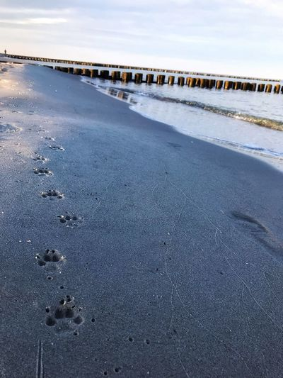 Paw prints at beach against sky