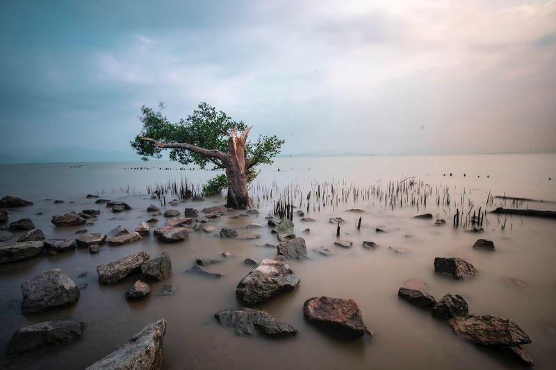 riverside Sea Sky Water Beach Land Cloud - Sky Horizon Over Water Horizon Beauty In Nature Nature Sand Tree Outdoors Solid