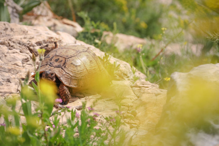 Close-up of turtle on field