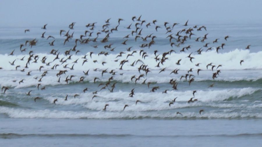 What The Flock!?? In The Moment Quick Trip To The Beach Oregon Coast Water_collection EyeEm Nature Lover EyeEm Birds