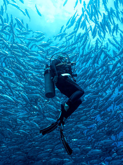 Diver is Watching a School of Jackfish at Balicasag Island near Bohol, Philippines Done That. Nature Philippines Schooling Balicasag Behaviour Blue Henryjager Jackfish Many Marine Ocean One Person School Scuba Diver Scuba Diving Sea UnderSea Underwater Underwater Photography Water Wildlife