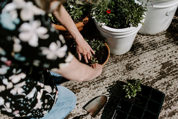 High angle view of woman holding potted plant