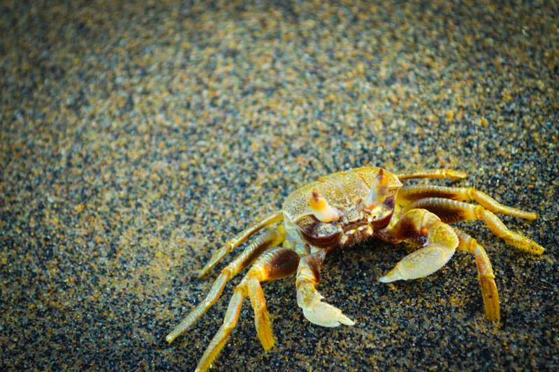 One Animal Sand Close-up Sea Life Nature No People Hermit Crab Beach Animal Wildlife Animal Themes Animal Photography Crab On The Beach Focus Focus On Macro Beauty Sea_collection Life Is A Beach Nikon D3200 EyeEm Gallery Nikon Photography