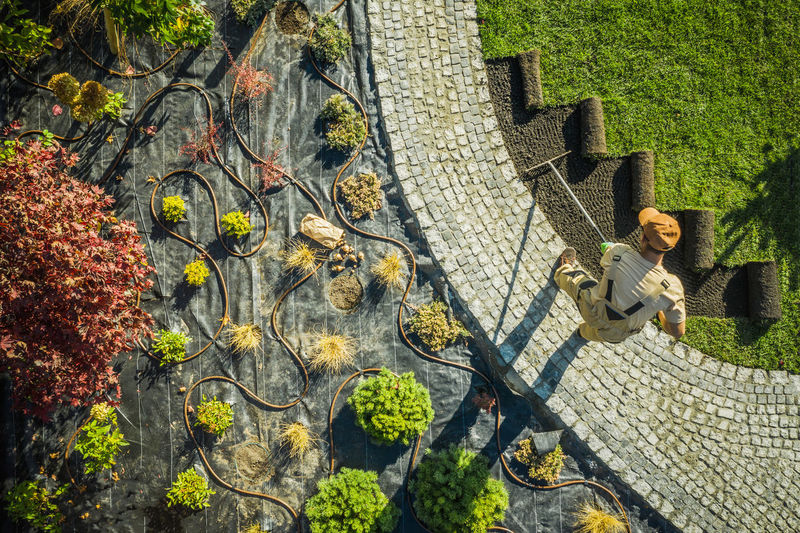 High angle view of old tree by building