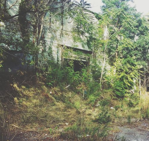 The Entrance Abandoned Dwellings Urbanexploration Wandering Around Exploring The Unknown Abandoned_junkies