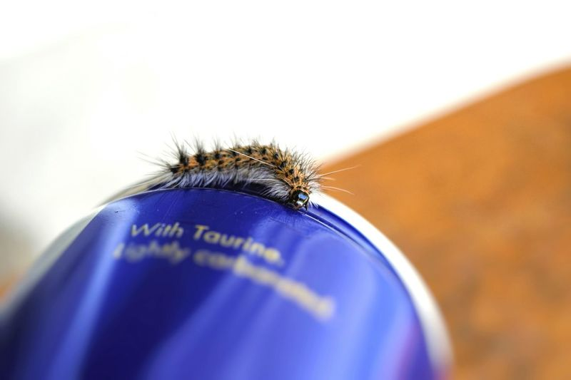 Close-up of caterpillar on container over table