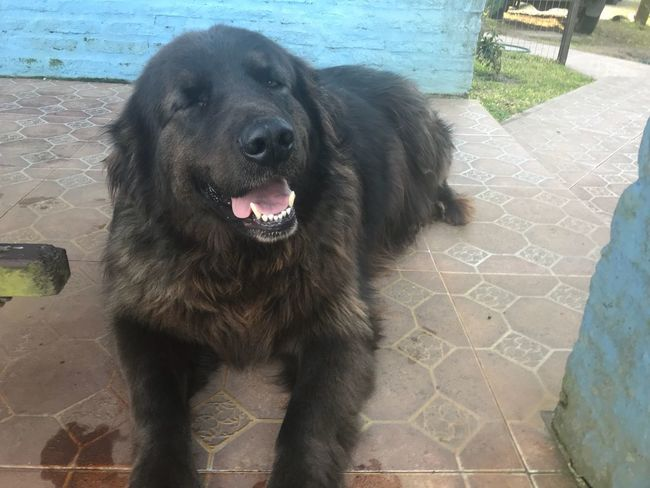 Zeus smiling Animal One Animal Mammal Animal Themes Domestic Pets Domestic Animals Dog Canine High Angle View Vertebrate Day No People Footpath Sunlight Nature Outdoors Black Color Portrait Mouth