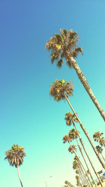 Nature Sky Outdoors Low Angle View Beauty In Nature Clear Sky Beach PalmtreesTree Close-up California Blue Colors Of Nature San Diego, California Ocean Beach San Diego Ocean Beach, Ca
