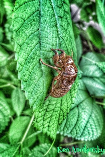 〜Déclenchement〜 Insects  Hello World OpenEdit EyeEm Nature Lover EyeEm Best Shots IPhoneography Nature Naturelovers 蝉 虫 cielbienvenus…commedécor…