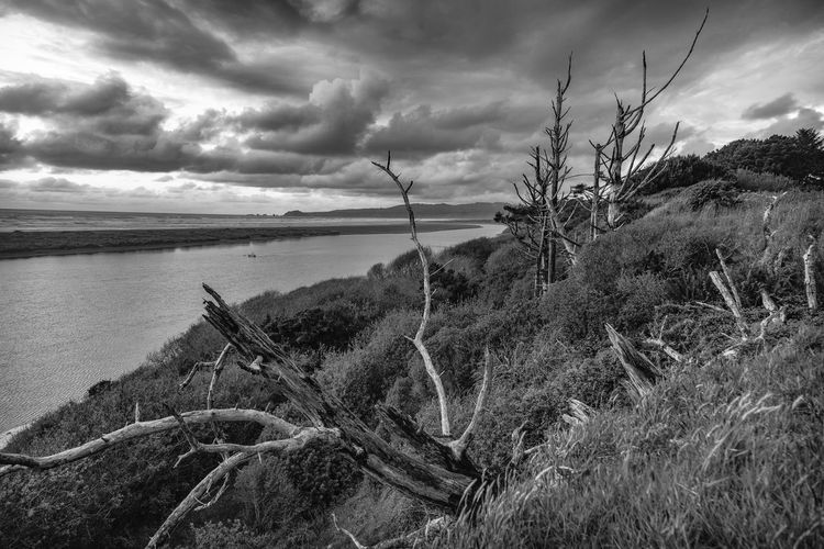 Near the mouth of the Mad River, McKinleyville, California. California River Ocean Pacific Ocean Tree Dead Trees Black And White Horizon Over Water Horizon Landscape_Collection Landscape McKinleyville,CA Humboldt Humboldt County Stormy Weather Storm Sky Scenics Scenics - Nature Cloud - Sky Tranquility Water Tranquil Scene No People Nature